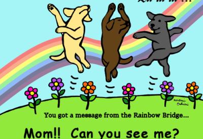 Dancing Labrador Trio at the Rainbow Bridge