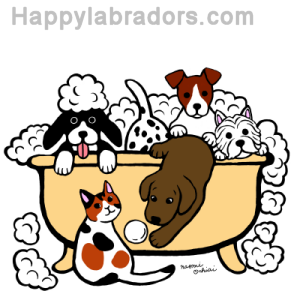 Happy Bath Time Chocolate Labrador Digital Drawing created by Naomi Ochiai from Japan