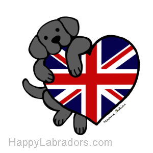 Black Labrador holding British Heart Gifts by HappyLabradors.com