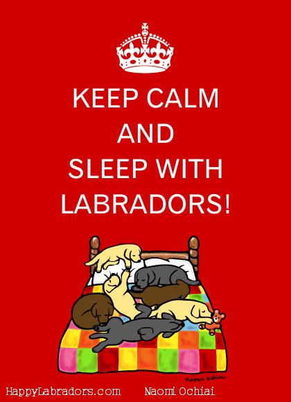 Funny Labrador illustration by Naomi Ochiai