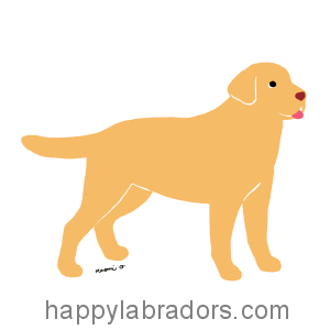 Yellow Labrador Little Tongue Cartoon Gifts