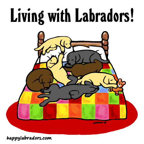 Labrador Fun Cartoon