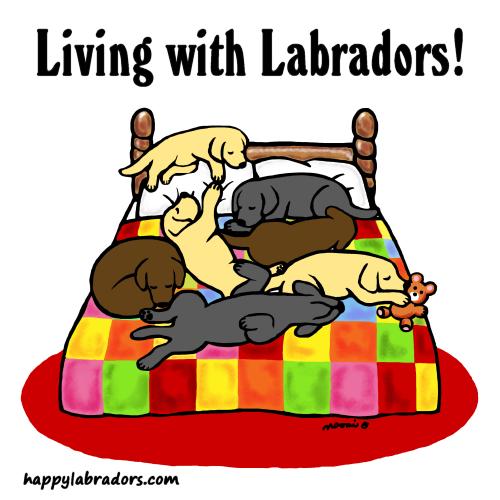 Labrador Fun Cartoon