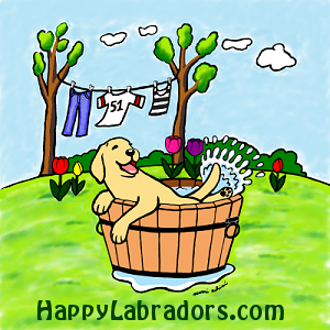Cute Yellow Labrador Puppy in the kid's pool by Naomi Ochiai