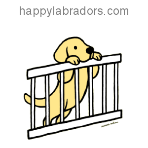 Yellow Labrador Puppy Gate Cartoon Gifts by HappyLabradors.com