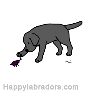 Black Labrador Friendly Digital Drawing created by Naomi Ochiai from Japan