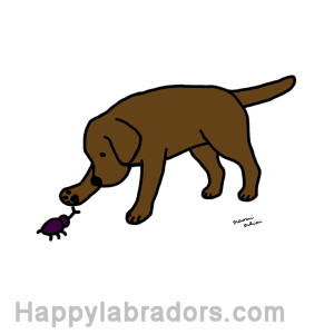 Black Labrador Friendly Digital Drawing created by Naomi Ochiai from Japan