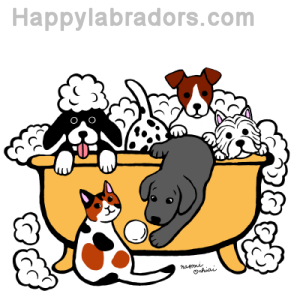 Happy Bath Time Black Labrador Digital Drawing created by Naomi Ochiai from Japan