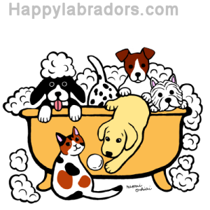 Happy Bath Time Yellow Labrador Digital Drawing created by Naomi Ochiai from Japan