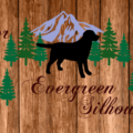 Labrador Evergreen T-shirts and Gifts by HappyLabradors